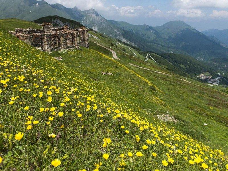 Blumenmeer mit Bergpanorama
