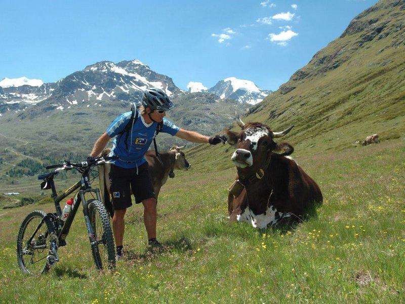 Mountainbiker streichelt eine Kuh