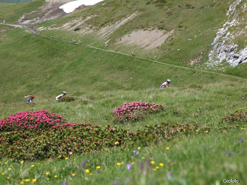 mit dem Mountainbike durch die sommerlichen Berge