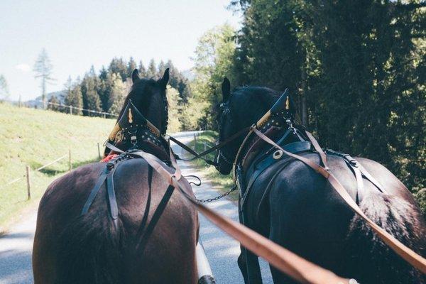 Kutschfahrt Noriker Sommer Werfenweng