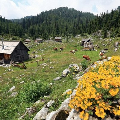 Dedno Polje Bohinj