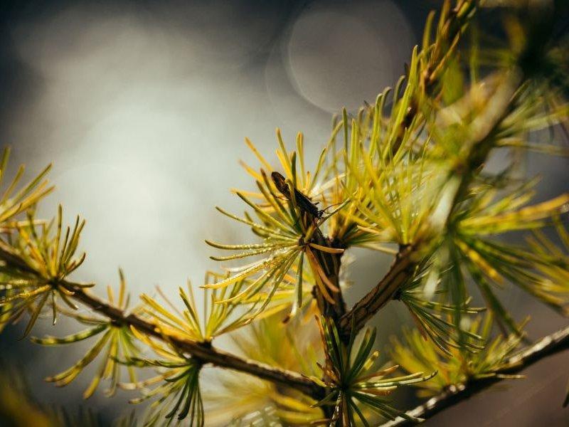 Flora im Aostatal (c) Franz Walter