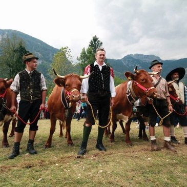 Cows Ball Bohinj
