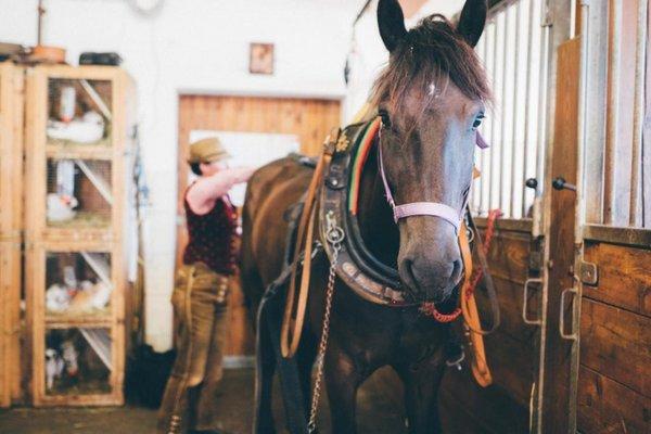 Noriker Pferd im Stall Pferdehof Werfenweng