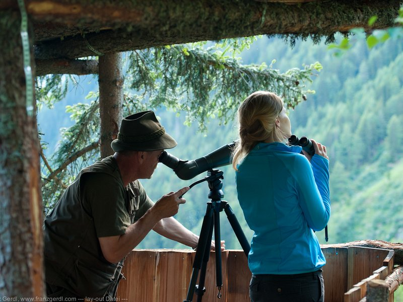 Wildtiersafari Tierbeobachtung Mallnitz Hohe Tauern ©Franz Gerdl